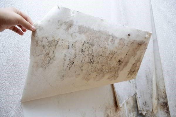 © Adobe ... unter der Tapete und ... im Badezimmer. Fürs Wachstum benötigt Schimmel Feuchtigkeit und Kohlenstoffverbindungen.